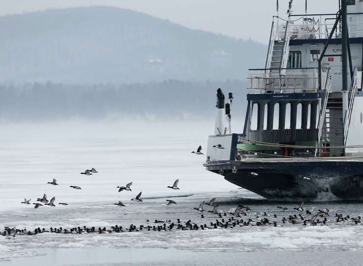 Essex-Charlotte ferry flushes ducks nears its dock (AP Photo/Mike Groll)