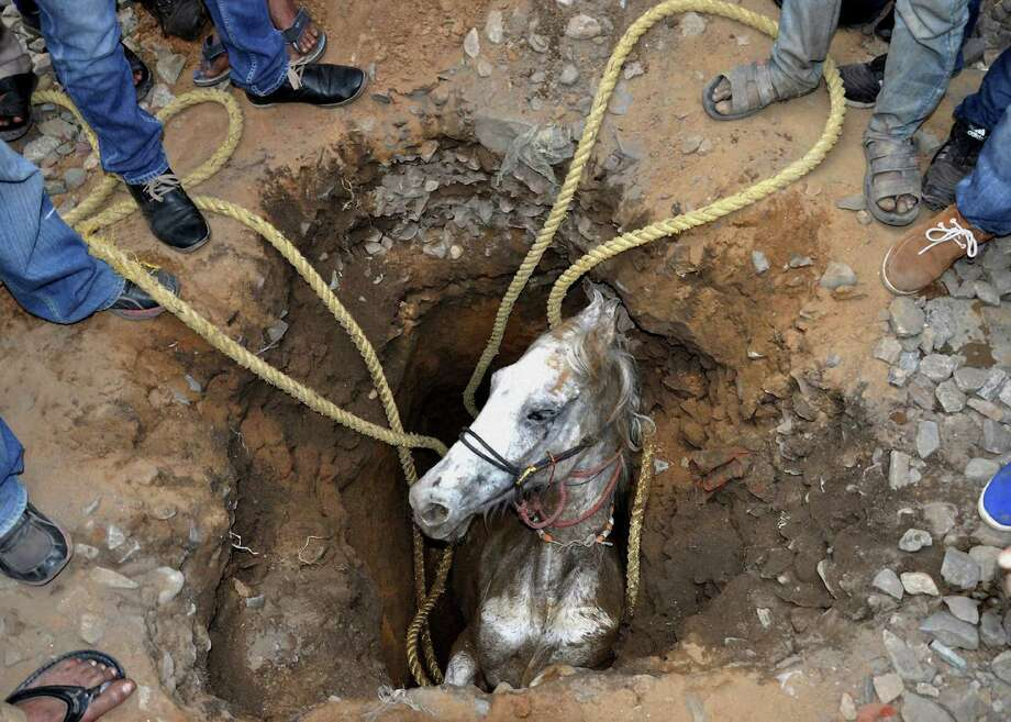 In this Wednesday, March 5, 2014 photo, people stand around a pit to rescue a horse that fell in, in Jalandhar, in the northern Indian state of Punjab. The horse was rescued from the pit, dug to erect electric poles, after a two-hour rescue operation, according to local reports. Photo: Uncredited, AP / AP2014