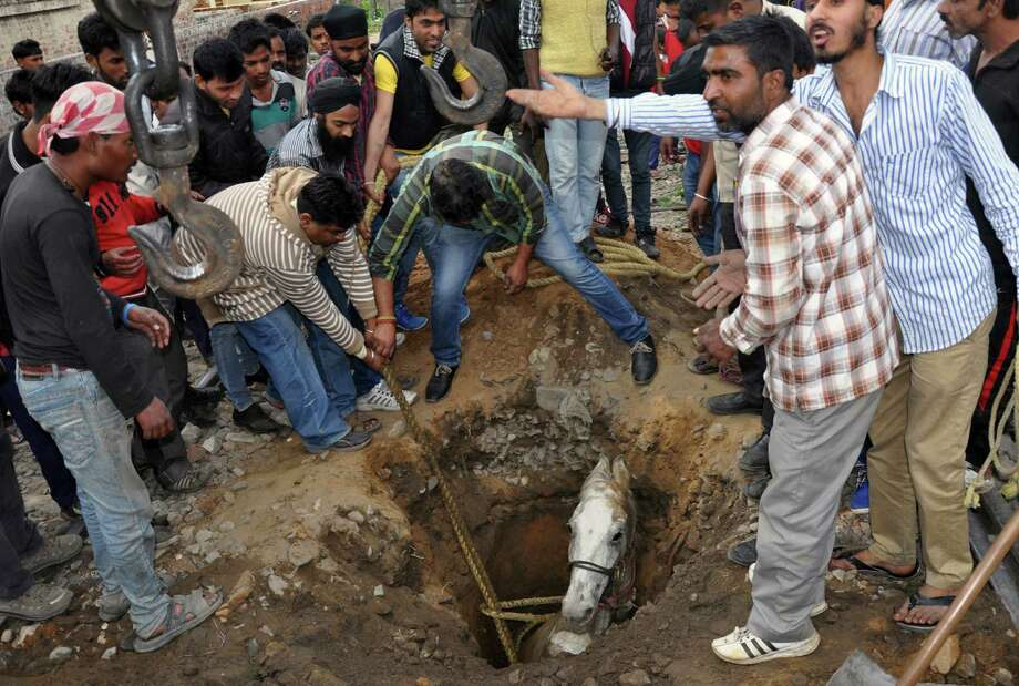 In this photograph taken on March 5, 2014, Indian volunteers help extract a horse that fell into a pothole in Jalandhar. Horses are still commonly used in India as beasts of burden for hauling goods down narrow lanes and in festive parades such as weddings and religious events. Photo: STRDEL, Getty Images / 2014 AFP