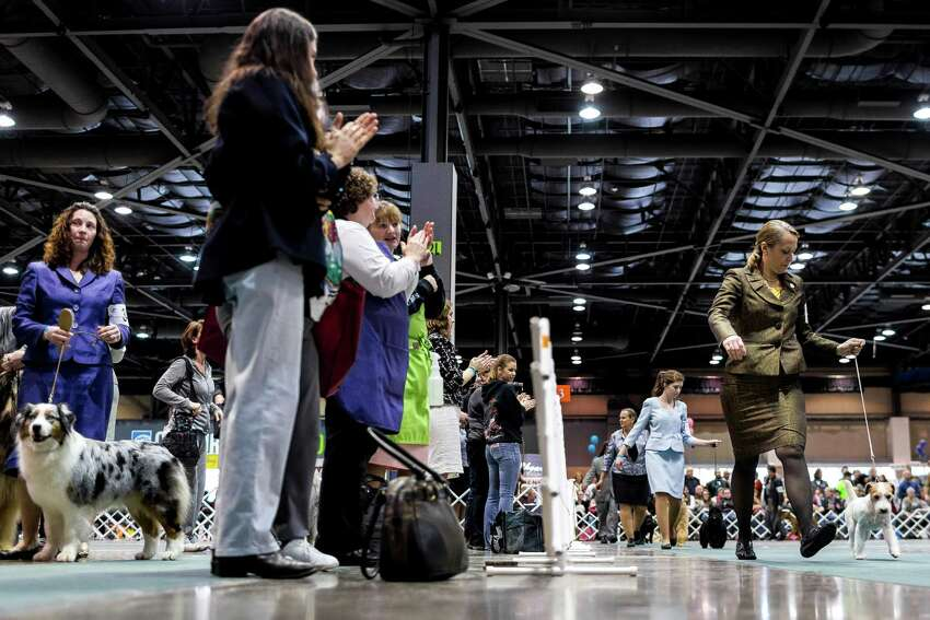 Animals are shown for awards during the Best In Show competition at the Seattle Kennel Club's 137th annual All-Breed Dog Show Sunday, March 9, 2014, at CenturyLink Field Event Center in Seattle. The second day of the event clocked in with 1721 dogs and 158 breeds.