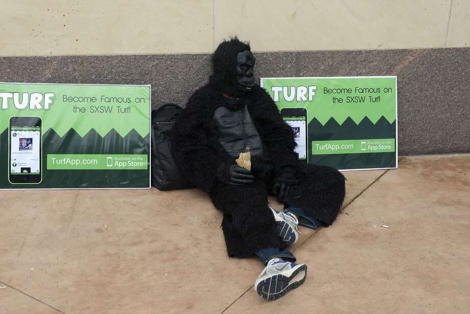 A man in a gorilla suit marketing for a company. Photo: Stephen Mclaren