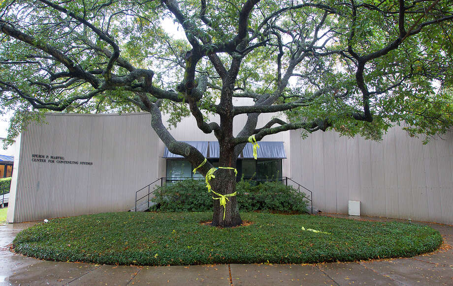 "The tree will stay put, but Rice University's Martel Center, or ""Art Barn,"" will be removed from campus. Demolition was delayed Monday after alumni stepped in. Photo: Cody Duty, Staff / © 2014 Houston Chronicle"