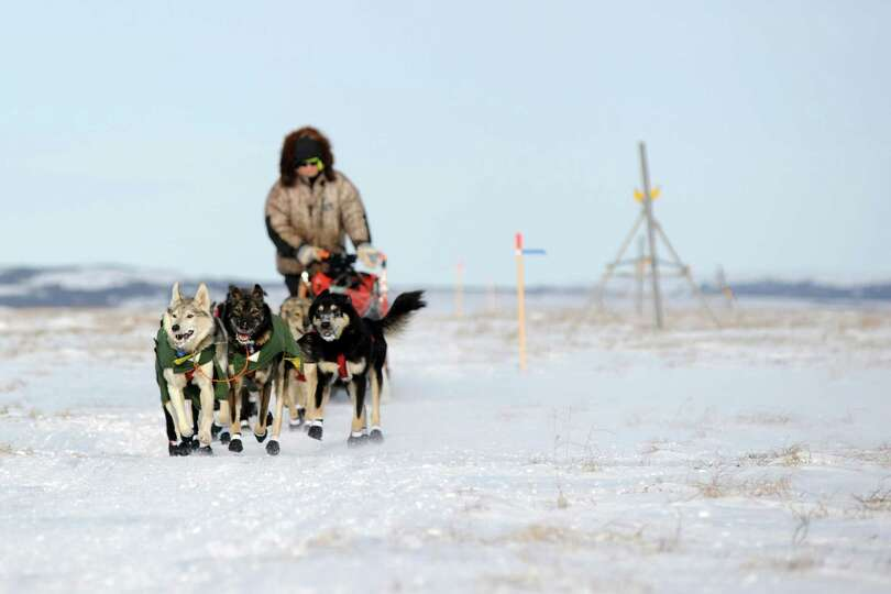 Iditarod musher Jeff King, from Denali, Alaksa, mushes between the checkpoints of White Mountain and