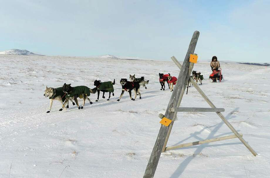 Iditarod musher Jeff King, from Denali, Alaska, mushes between the checkpoints of White Mountain and Safety, the last checkpoint before the finish line in Nome. King was the first musher to leave the White Mountain checkpoint during the 2014 Iditarod Trail Sled Dog Race on Monday, March 10, 2014. (AP Photo/The Anchorage Daily News, Bob Hallinen) Photo: Bob Hallinen, Associated Press / Anchorage Daily News