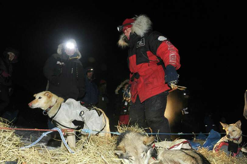 ditarod musher Aliy Zirkle, from Two Rivers, AK, cares for her dog team after she arrived second beh