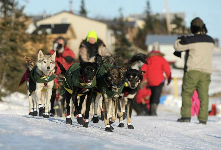 Iditarod musher Jeff King. Photo: Bob Hallinen, McClatchy-Tribune News Service / Anchorage Daily News