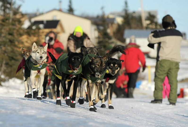 Iditarod musher Jeff King, from Denali, AK, leaves the Koyuk checkpoint during the 2014 Iditarod Tra