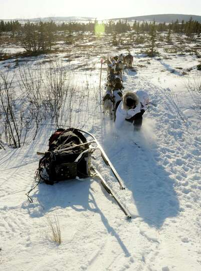 Iditarod musher Aliy Zirkle, from Two Rivers, AK, trips as she runs back to her tipped over sled aft