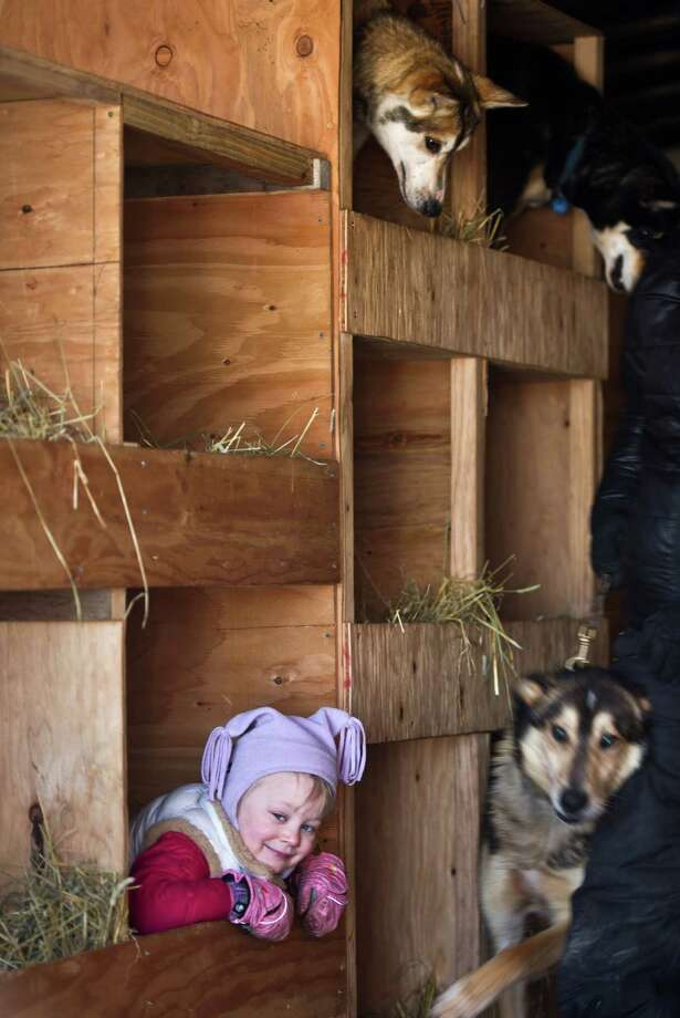 Dallas Seavey's daughter, Annie, plays in her dad's dog truck before the start of the Iditarod Trail Sled Dog Race on Willow Lake, Sunday, March 2, 2014, in Willow, Alaska. The race will take mushers nearly a thousand miles to the finish line in Nome, on Alaska's western coast. (AP Photo/Anchorage Daily News, Marc Lester) ORG XMIT: AKAND203 Photo: Marc Lester, AP / Anchorage Daily News