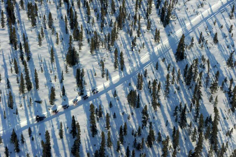 In this Thursday, March 6, 2014 photo, an Iditarod musher travels through the spruce forest between
