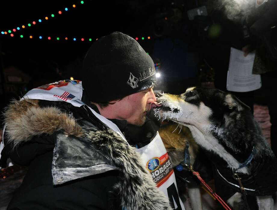 Iditarod winner Dallas Seavey gets a kiss from one of his dogs after a record-setting win that came as a surprise to the victor. Photo: Bob Hallinen, Associated Press