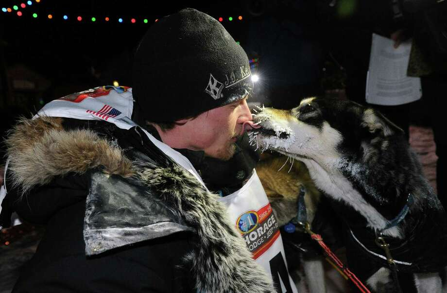 Dallas Seavey gets some love from one of his dogs after winning the 2014 Iditarod Trail Sled Dog Race in Nome, Alaska. Photo: Bob Hallinen / Associated Press / Anchorage Daily News