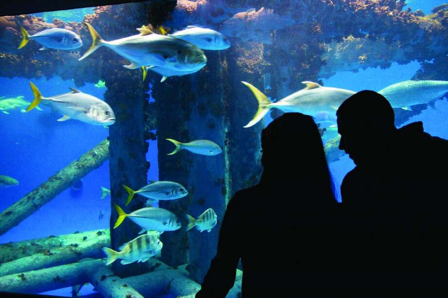 The Texas State Aquarium is a popular place for families to visit in Corpus Christi. Photo: John Tedesco, San Antonio Express-News