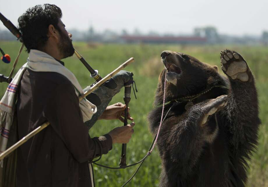 Bruin groovin':A trained bear dances to Naseer Ahmed's bagpipe music in Islamabad. Ahmed and the bear earn around 500 rupees ($5) a day performing for passers-by, enough to support Ahmed's family of seven and the bear, presumably. Photo: B.K. Bangash, Associated Press