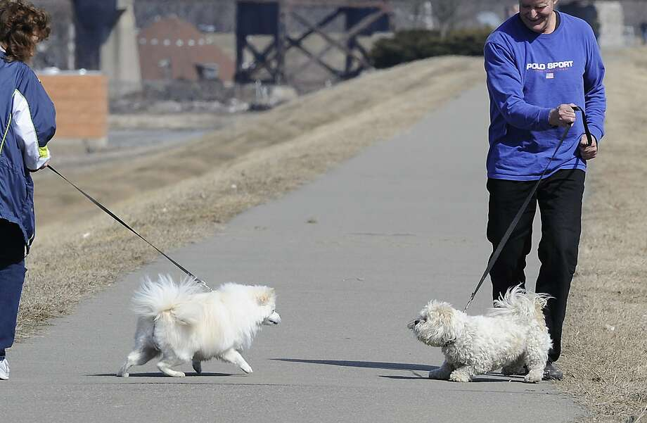 The day Fifi finally met a dog she could beat up: Handlers hold back their dogs while walking along the dike in Kingston, Pa. Photo: Mark Moran, Associated Press