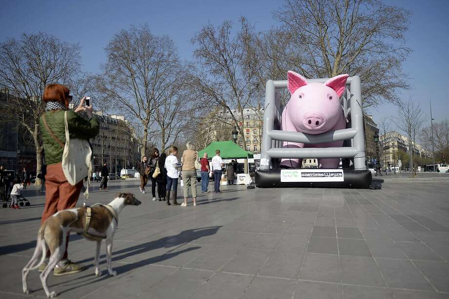Pen and oink: In Paris' Republic Square, a greyhound looks at the biggest pig he's ever seen. The super-sized swine inflatable was erected by animal-rights demonstrators protesting hog-farming conditions. Photo: Martin Bureau, AFP/Getty Images