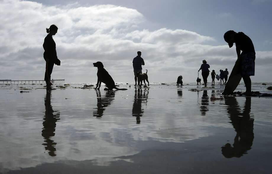 Dogs and their owners play under sunny skies at Ocean Beach Dog Beach Wednesday, March 12, 2014, in San Diego. Southern California's weather returned to warm and dry conditions Wednesday, a week after one of the few significant storms of the winter. (AP Photo/Gregory Bull) Photo: Gregory Bull, Associated Press
