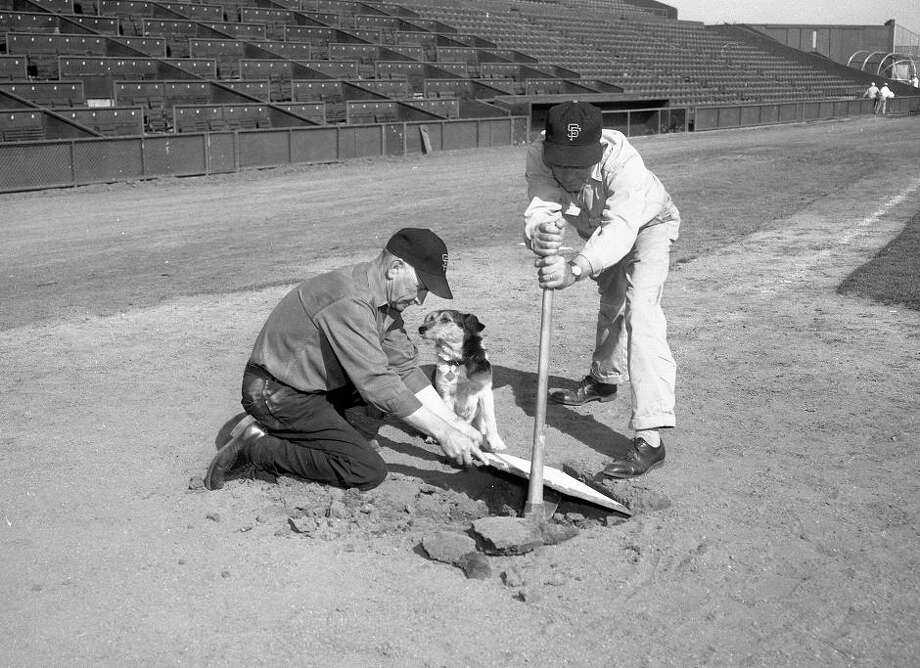 "Oct. 13, 1959: And so we enter the depressing part of the gallery. Hold out because it ends on an uplifting note -- we're like a ""Highway to Heaven"" episode that way. Ralph Schurr and Harvey Spargo dig up home plate. Silver Jr. watches. Photo: Gordon Peters, The Chronicle"
