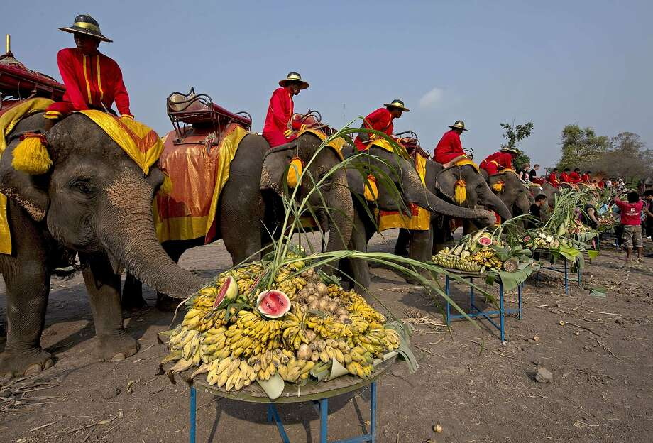 Elephantine appetites: Pachyderms hit the buffet tables on National Elephant Day in Thailand's Ayutthaya province. Photo: Pornchai Kittiwongsakul, AFP/Getty Images