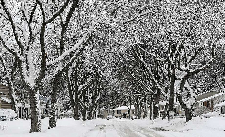 Ditto for you, Illinois: Fresh snow covers trees in Palatine, Ill. Photo: Mark Welsh, Associated Press
