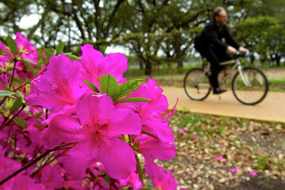 A bicyclist takes a leisurely ride along Main Street near Rice University. Photo: Brett Coomer, Houston Chronicle / © 2012 Houston Chronicle