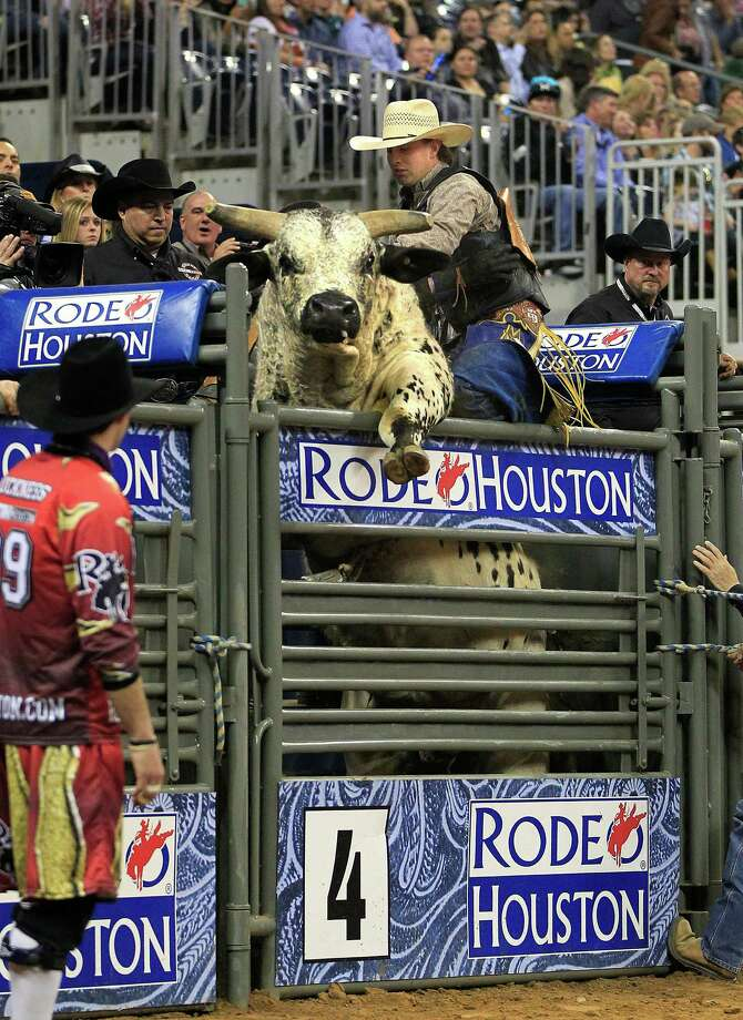 Black Haul the bull wants to take Tyler Smith for a ride before the gate opens during the final round of the BP Super Series lll Rodeo Houston at Reliant Stadium Wednesday, March 12, 2014, in Houston. Photo: Johnny Hanson, Houston Chronicle / © 2014  Houston Chronicle