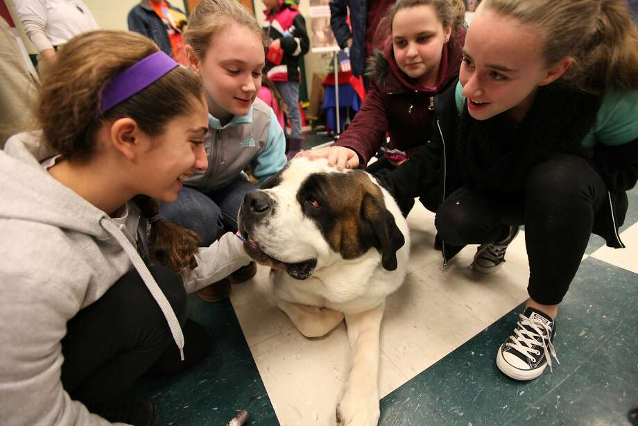 Will comfort for Thin Mints: Clarence, a K-9 of the Greenfield, Mass., 