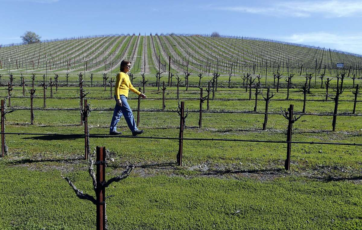 Sue Luft, walks her four arces of Zinfandel vines in Templeton, Calif. on Friday March 14, 2014. With the current drought a bitter water fight between rural homeowners and large wineries has splintered Paso Robles and surrounding communities. Luft, the president of the group PRO Water Equity believes a water district should provide local control for sharing groundwater.