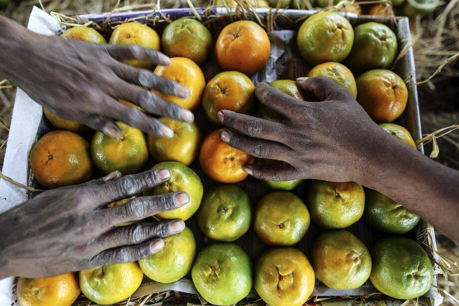 India: Workers pack a box with oranges at a wholesale market in Nagpur, Maharashtra, India. Photo: Dhiraj Singh, Bloomberg