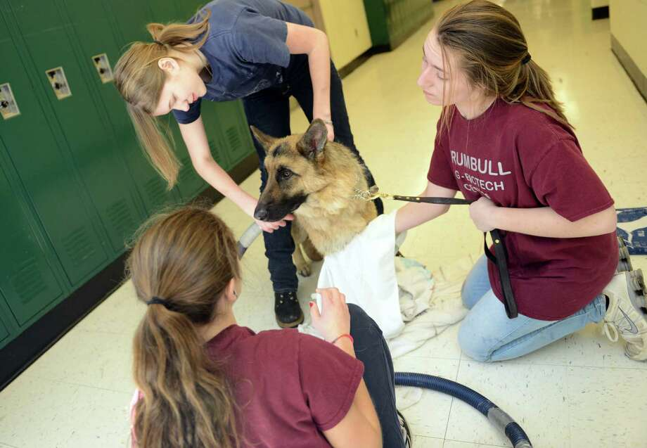 Students hold a dog-washing fundraiser Saturday, Mar. 15, 2014, at Trumbull High SchoolâÄôs Agriscience and Biotechnology Center in Trumbull, Conn. Photo: Autumn Driscoll / Connecticut Post