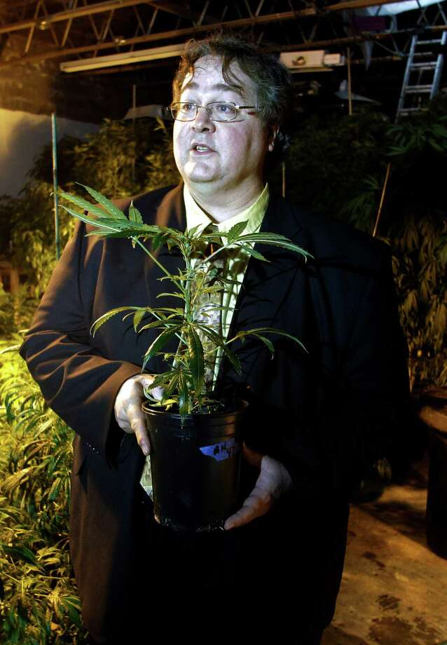 In this March 28, 2011 photo, Paul Stanford holds a marijuana plant in his growing facility in Portland, Ore.  Stanford, one of the nation's leading marijuana legalization advocates, doesn't only want Oregonians to have the right to smoke pot. He wants it written into the state constitution. Stanford's proposed constitutional amendment is one of several pot questions that may go to Oregon voters in November. Others are offering competing measures for how the state would regulate and tax the drug. Photo: Rick Bowmer, AP / AP
