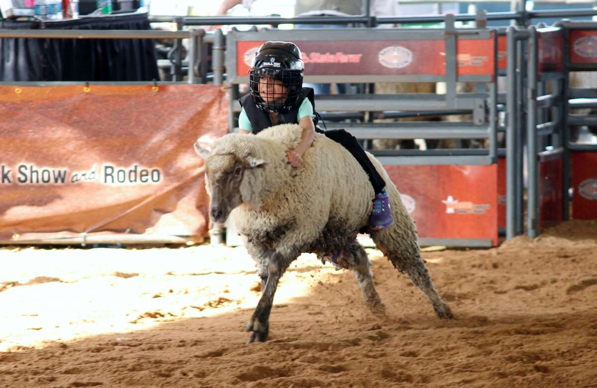 Being from Michigan, I had no idea what Mutton Bustin was. I was in awe of the brave 5 and 6 yr olds riding the sheep. It was fun for everyone! Loved it. Margaret Splan
