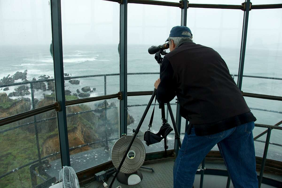 Bill Clement, a guide at the Point Arena Lighthouse, keeps an eye on basking marine life with his spotting scope.