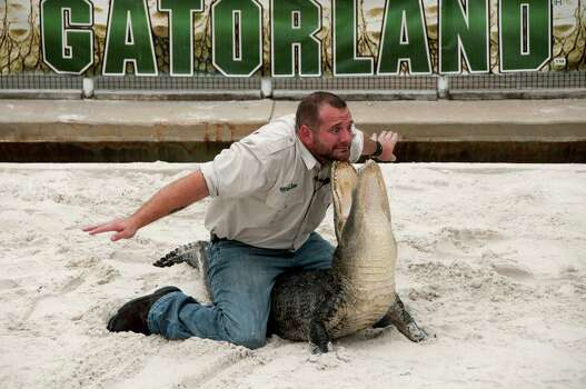 There's always the alligator wrestling at Gatorland for those tired of reveling on the beaches. Photo: Peter Ptschelinzew, Multiple / Lonely Planet Images