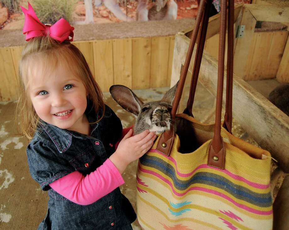Sloan Milligan, 2, pets a baby kangaroo after having her photo taken at Mark Schoebel's booth at the rodeo. Photo: Dave Rossman, Freelance / Freelance