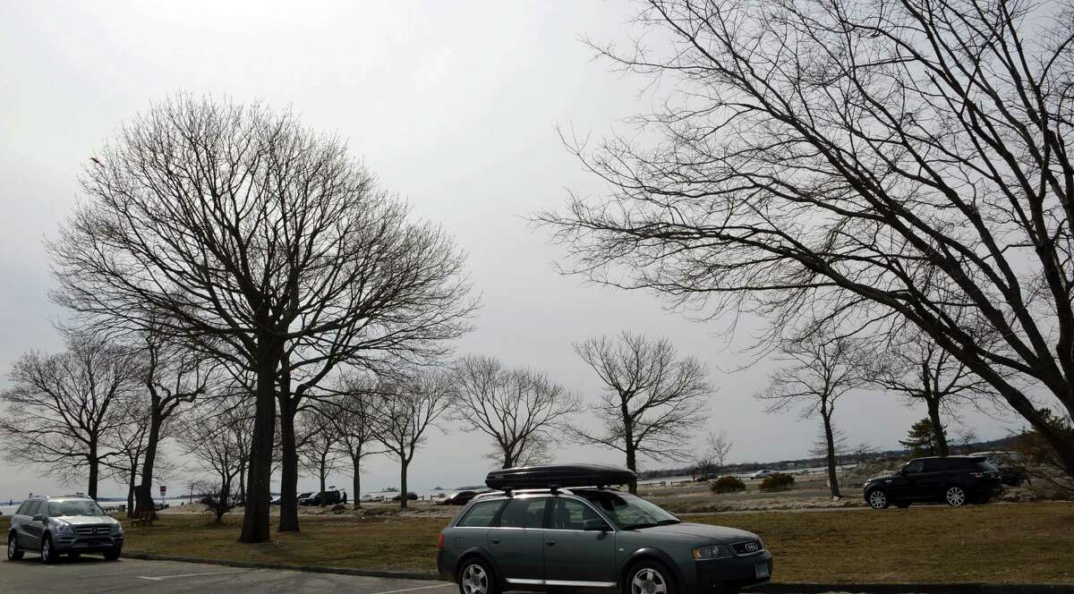 The future of this stand of trees at Compo Beach is being weighed by a committee drawing up a new master plan.
