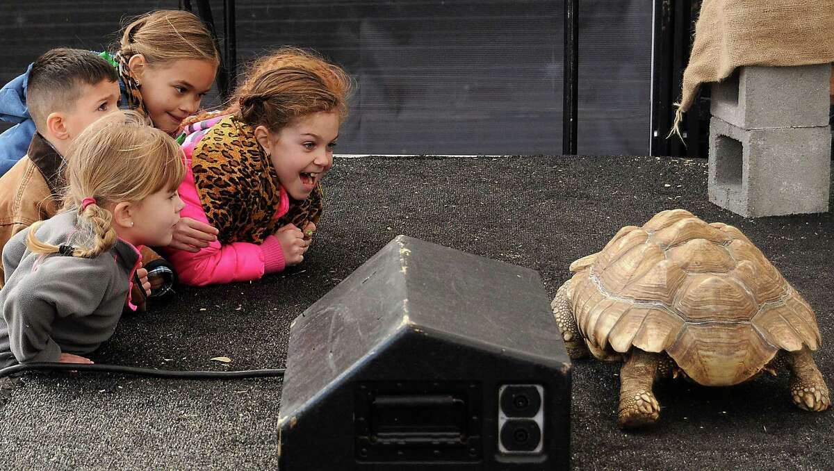 Children watch a tortoise wander around during the Amazing Animals show on the Stars Over Texas Stage at the Houston Livestock Show & Rodeo Monday March 17, 2014.