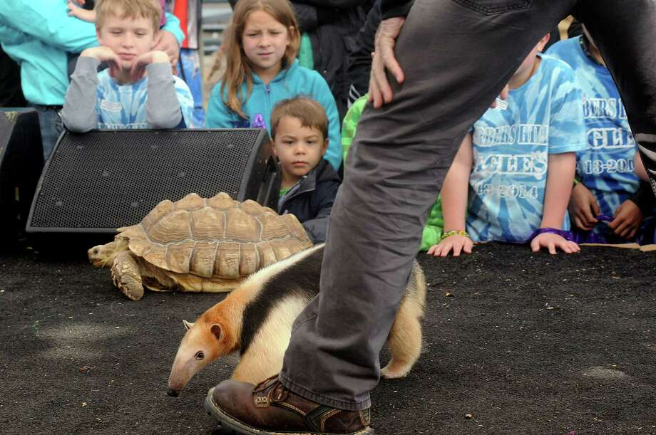 Children watch a tortoise and an anteater during the Amazing Animals show on the Stars Over Texas Stage at the Houston Livestock Show & Rodeo Monday March 17, 2014. Photo: Dave Rossman, For The Houston Chronicle / Freelance
