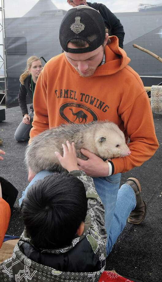 Chldren pet a possum held by David English during the Amazing Animals show on the Stars Over Texas Stage at the Houston Livestock Show & Rodeo Monday March 17, 2014. Photo: Dave Rossman, For The Houston Chronicle / Freelance