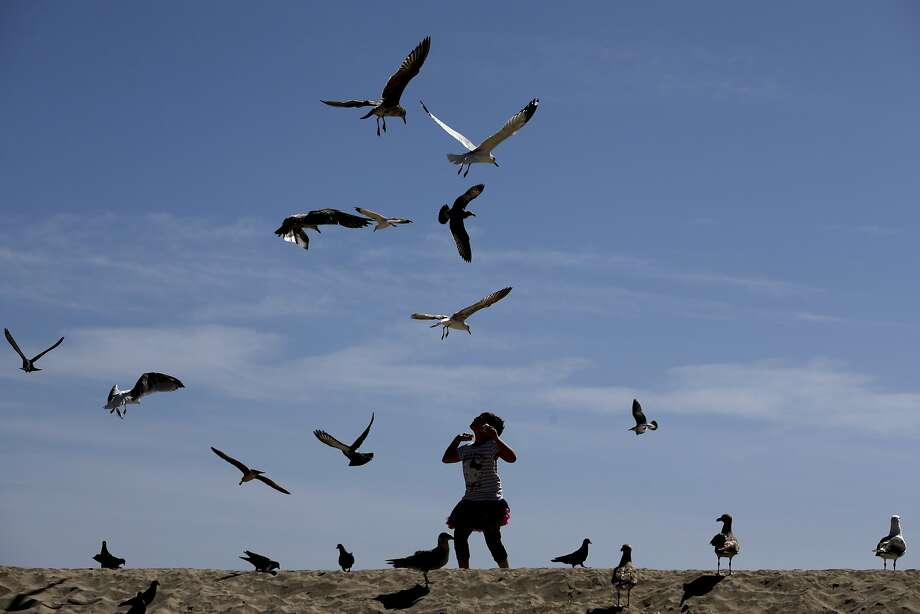 Katrina Consolo, 9, visiting from Enoch, Utah, feeds birds on the beach, Tuesday, March 18, 2014, in Seal Beach, Calif. (AP Photo/Jae C. Hong) Photo: Jae C. Hong, Associated Press
