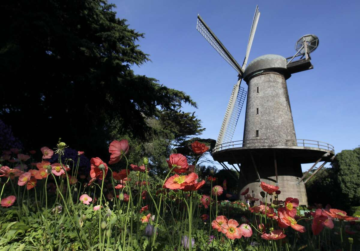 Flowers bloom in the Queen Wilhelmina Garden in front of the Dutch windmill at Golden Gate Park in San Francisco, Calif. on Wednesday, March 19, 2014. More funding is needed to renovate the windmill located on the northwest corner of the park.