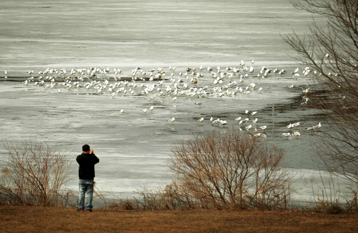 A man photographs a flock of seagulls on the still half frozen surface of Bunnell's Pond at Beardsley Park in Bridgeport, Conn. on Wednesday, March 19, 2014.