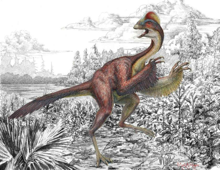 "Anzu wyliei, a new dinosaur species, ""would have been a cross between a chicken and a lizard,"" said Tyler Lyson, a paleontologist at the Smithsonian's National Museum of Natural History. Photo: Courtesy Illustration / Carnegie Museum Of Natural History / Carnegie Museum of Natural Histo"