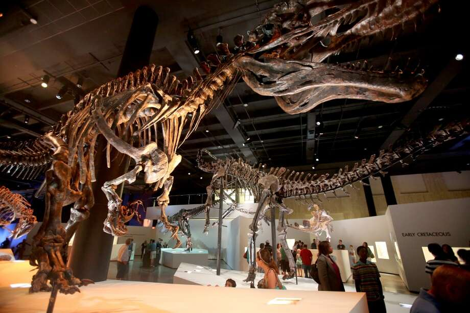The Dan Duncan Family Wing , the New Hall of Paleontology at the Houston Museum of Natural Science in Houston. Giant dinosaurs should make the kid in us happy. Photo: Thomas B. Shea, For The Chronicle