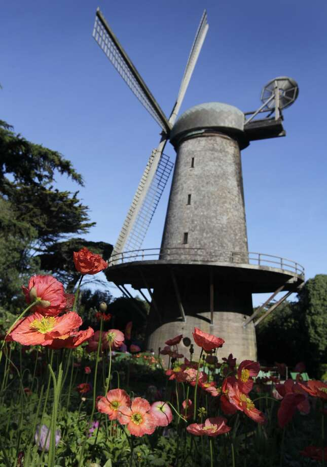 Flowers bloom in the Queen Wilhelmina Garden in front of the Dutch windmill at Golden Gate Park in San Francisco, Calif. on Wednesday, March 19, 2014. More funding is needed to renovate the windmill located on the northwest corner of the park. Photo: Paul Chinn, The Chronicle