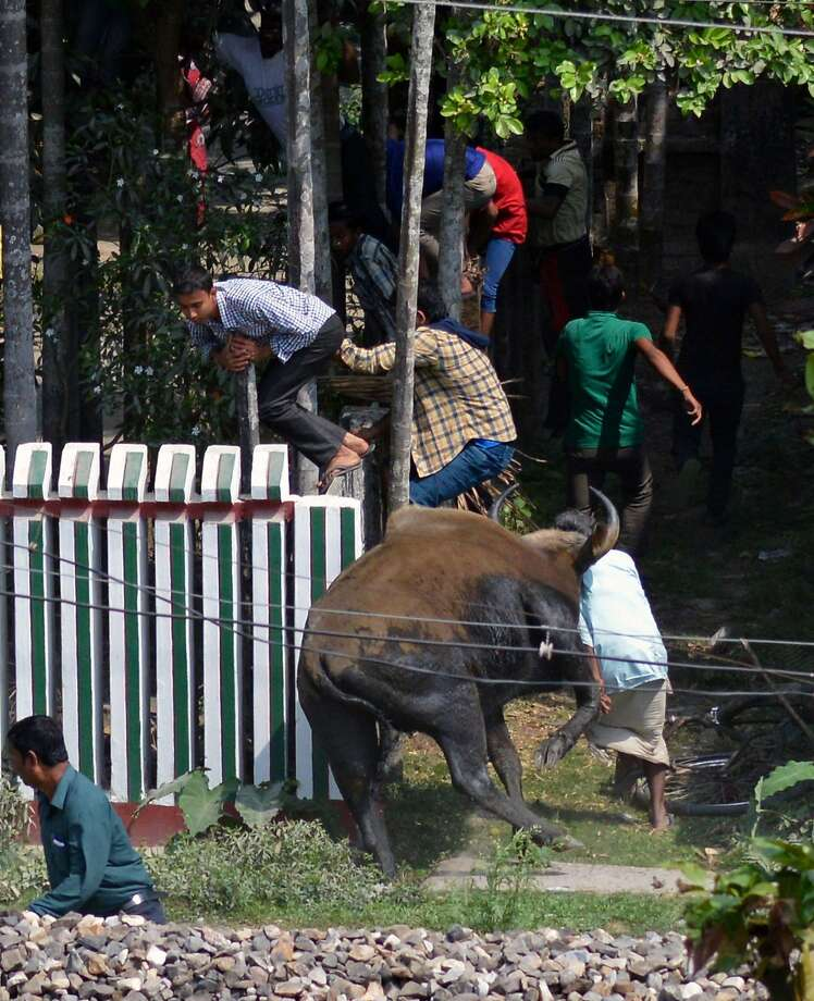 Nature encroaches on humans for a change:Villagers scatter as a wild 