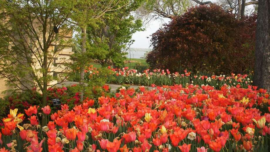 Dallas Blooms features more than 500,000 spring-blooming bulbs, cherry trees and other flowers that paint the Dallas Arboretum and Botanical Gardens with vivid color. Photo: Courtesy Photo, Dallas Arboretum And Botanical Garden