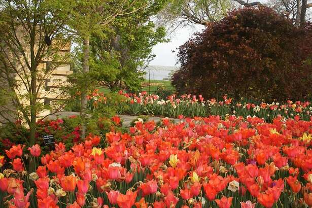 Dallas Blooms features more than 500,000 spring-blooming bulbs, cherry trees and other flowers that paint the Dallas Arboretum and Botanical Gardens with vivid color.