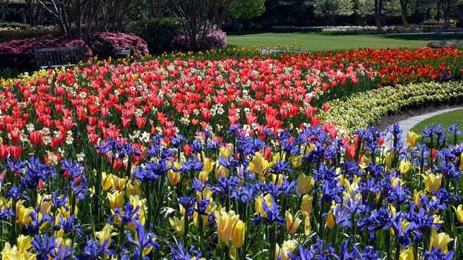 Among the blooming bulbs are Dutch iris, tulips and blossoms in almost all colors of the rainbow. Photo: Courtesy Photo, Dallas Arboretum And Botanical Garden