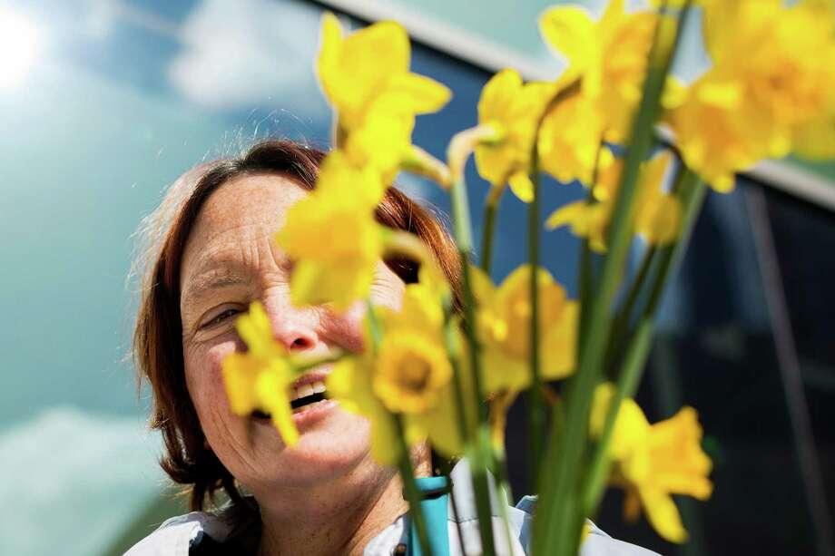 Smiling through flowers, Heather Kmitta joins other Pike Place Market volunteers to distribute nearly 10,000 daffodils to passers-by Thursday, March 20, 2014, in downtown Seattle. The generosity helped to spread spring cheer and raise public awareness of the flowers for sale at Pike Place Market. Photo: JORDAN STEAD, SEATTLEPI.COM / SEATTLEPI.COM